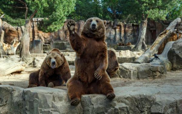 oso helenitaz